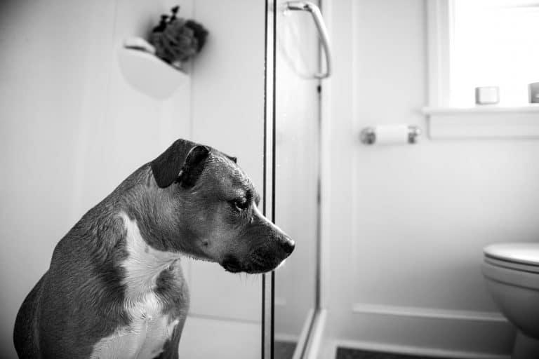A dog with a potty