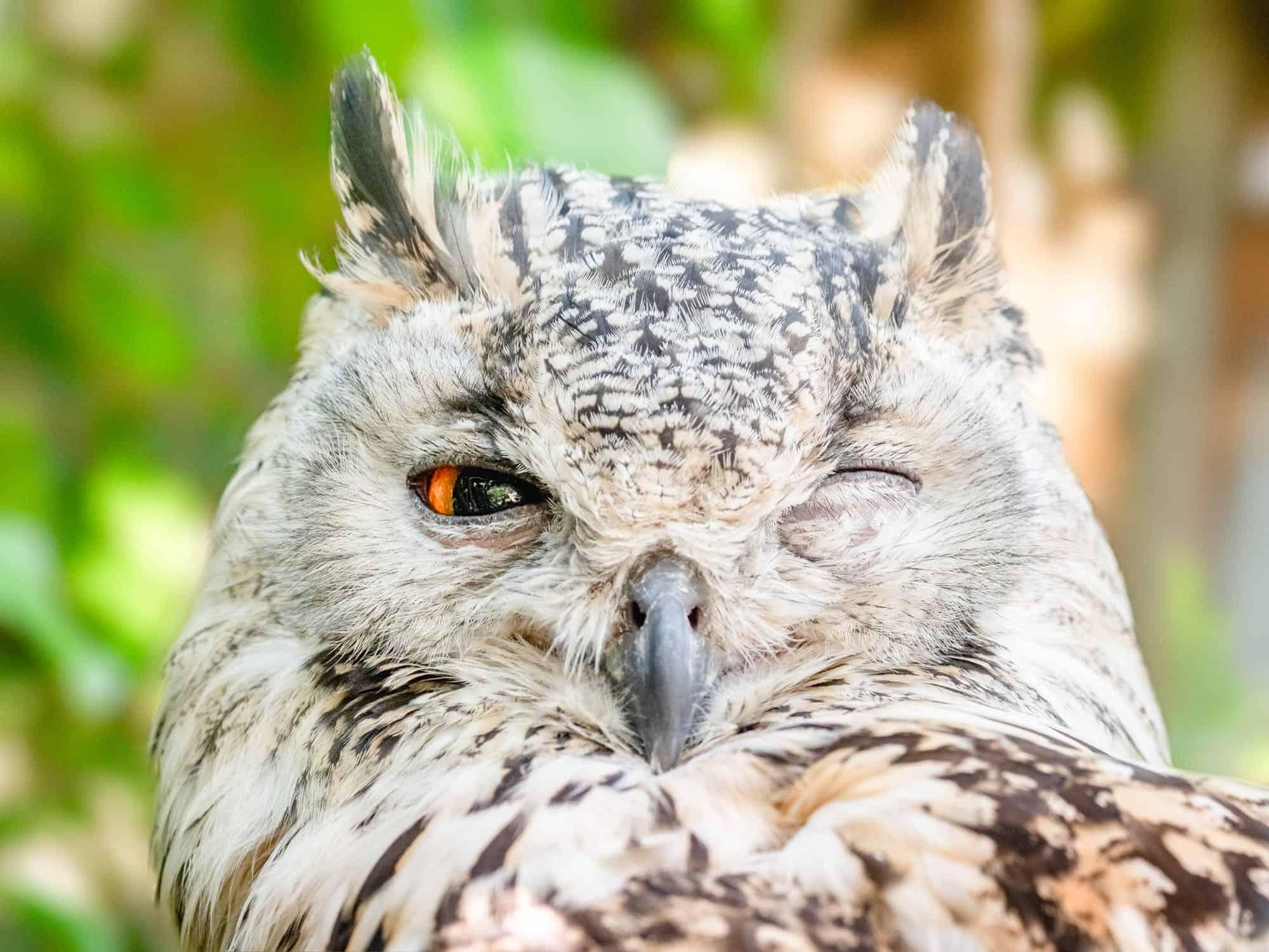 A mischievous owl