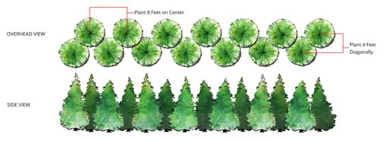 Staggered row of trees diagram