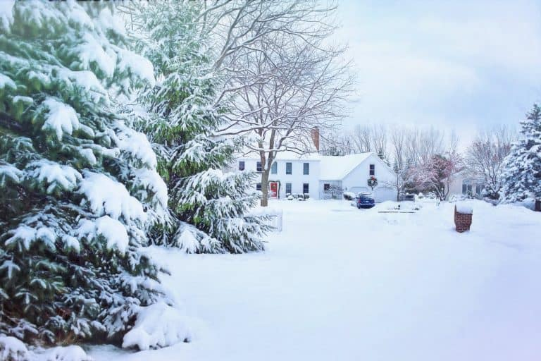 A very frozen morning
