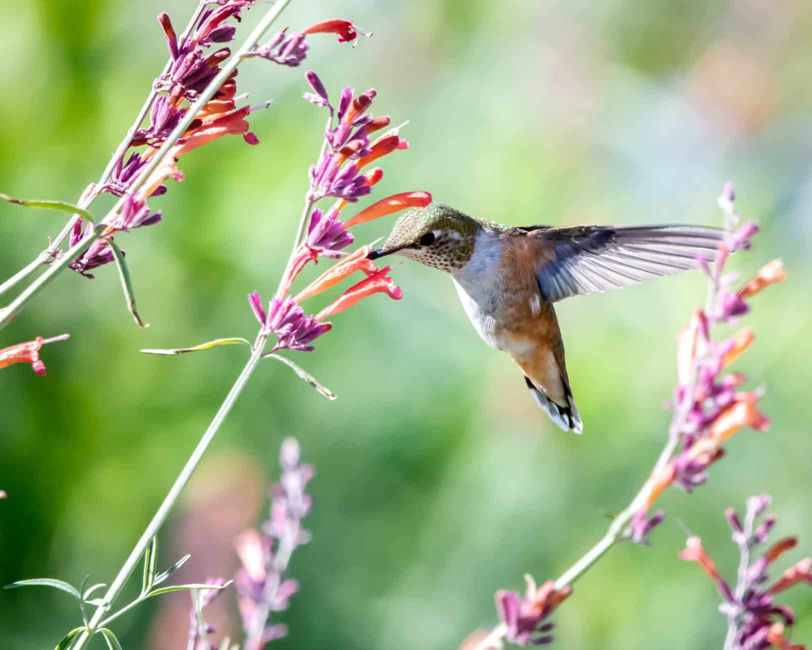 patio plant with a hummingbird