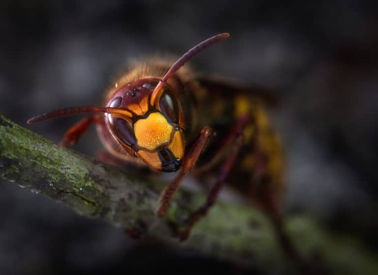 keep this wasp away from your patio!