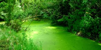 algae can make a mess out of anything