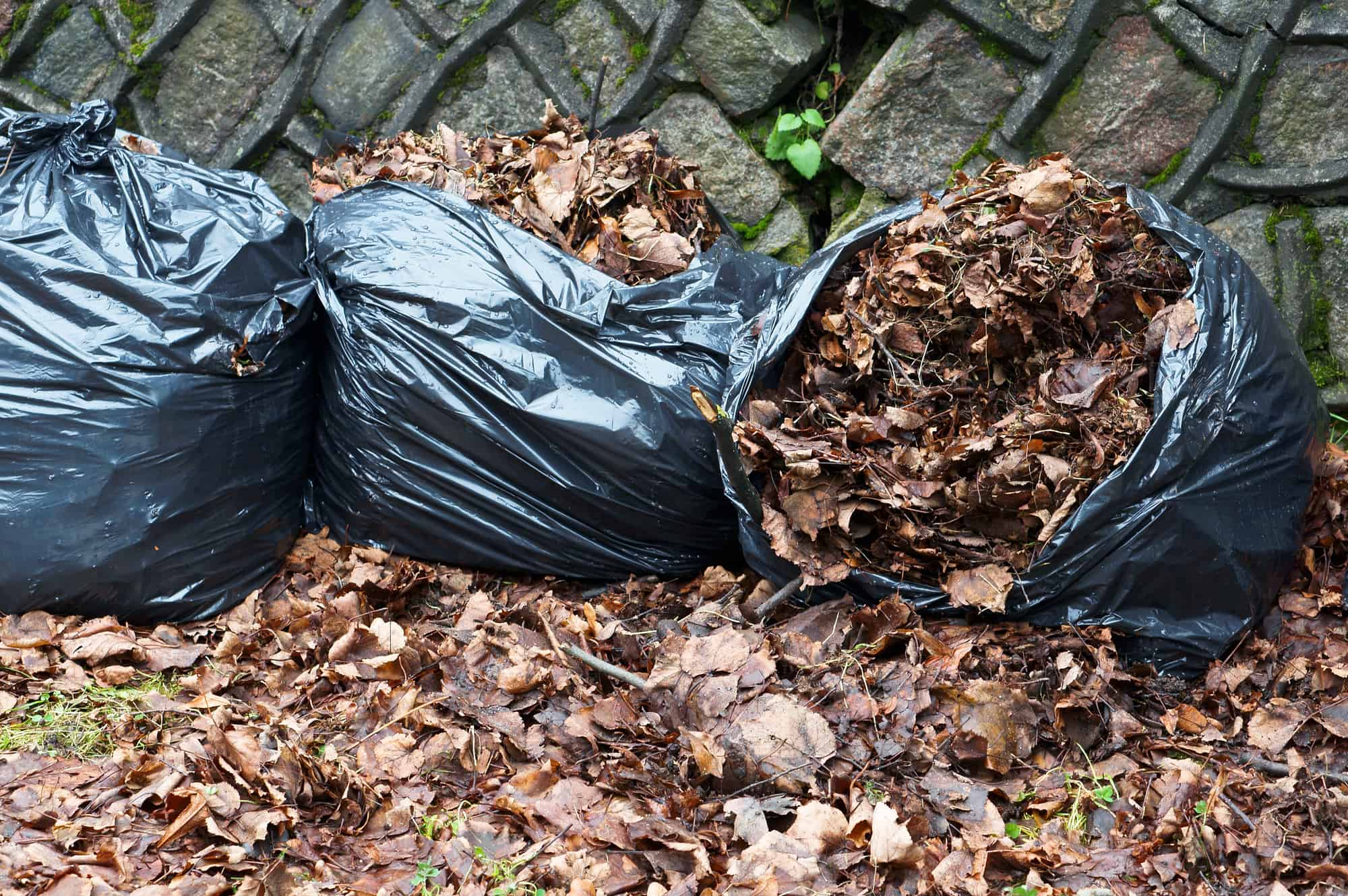 bagged leaves ready to be disposed of